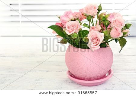 Beautiful roses in pot on windowsill