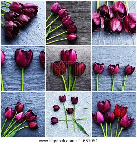 Collage of violet tulips