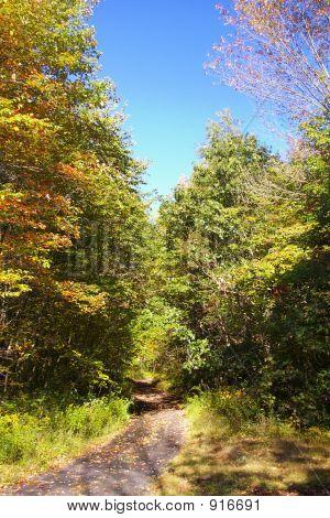 Outono Lane