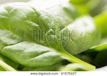 healthy eating, diet, cooking and vegetarian food concept - close up of fresh green spinach leafs
