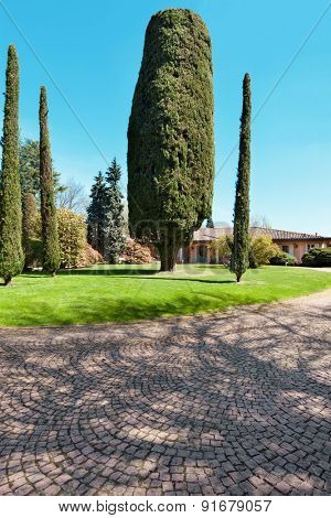 large park of a villa with cypresses, outdoors