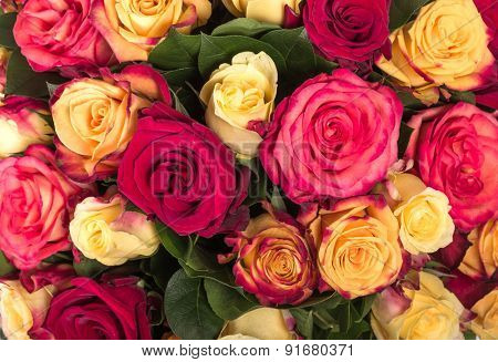 Abstract background of flowers. Close up