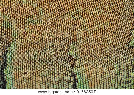 Skin Texture Pattern Green Iguana