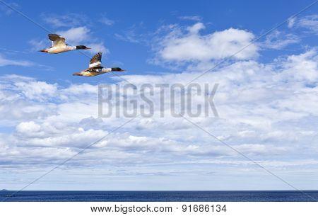 Two goo-sanders above the sea.
