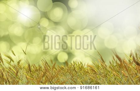 3D render of Golden wheat against a defocussed background