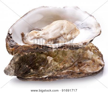 Raw oyster on a white background.