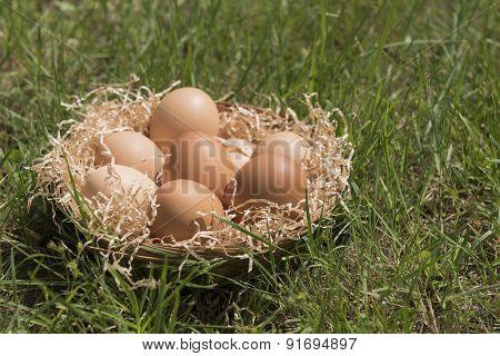 Eggs On Lawn