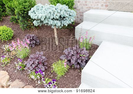 Ornamental Miniature Pine Tree In A Flowerbed
