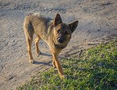 picture of stray dog  - Young stray dog in the spring sunshine - JPG