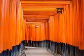 pic of inari  - Fushimi Inari torii gates in Kyoto - JPG