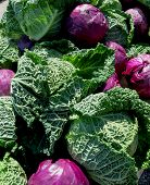 stock photo of cruciferous  - A collection of large beautiful purple and green cabbages cover a table - JPG