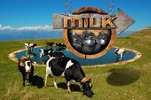 foto of milk  - Wooden sign with directional arrow text Milk grazing cows and steel cans for the transport of milk - JPG