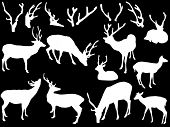 picture of antlered  - illustration with deer and antler silhouettes isolated on black background - JPG