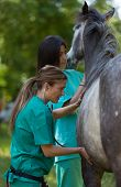 image of great horse  - Veterinary great performing a scan to a young mare - JPG