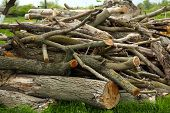 picture of firewood  - Pile of firewood - JPG