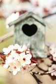 stock photo of nesting box  - Decorative nesting box on bright background - JPG