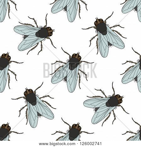 Seamless pattern with fly. Musca domestica . hand-drawn . fly. Vector illustration