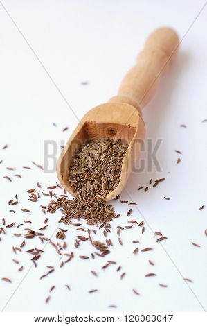 Caraway On The Wood
