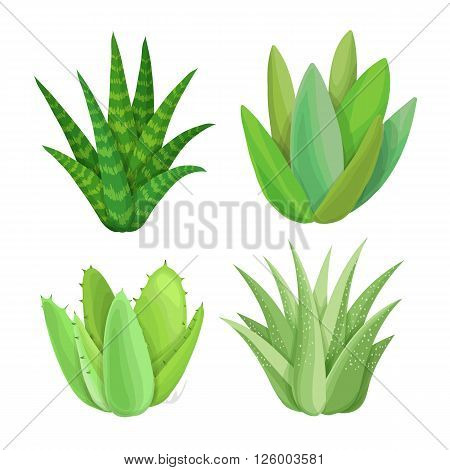 Succulent set. Isolated succulents on white background. Hand painted garden illustration. Vector floral elements.