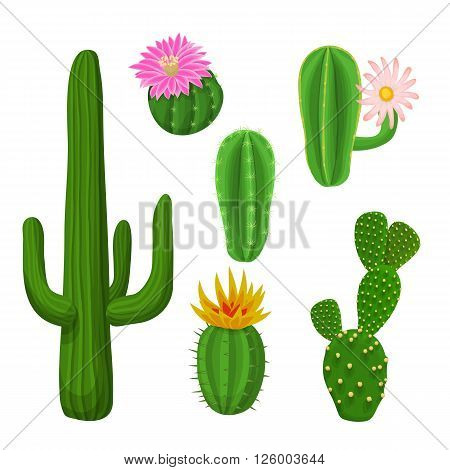 Cacti plant set. Vector illustration with cacti.
