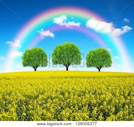 Rainbow over spring landscape with rape field