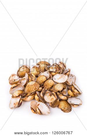 Cockles shells can be recycled as partial cement replacement in concrete