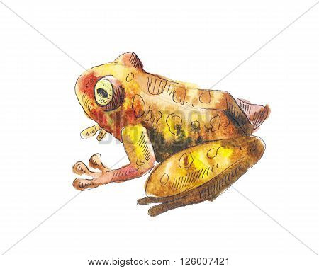 Frog watercolor. Watercolor drawing with brown frog. Little frog in watercolor. Sketch of toad.