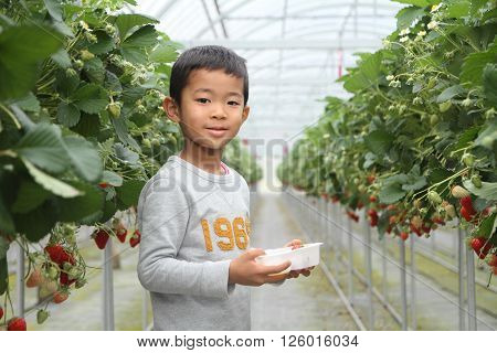 Japanese boy eating strawberry (first grade at elementary school)