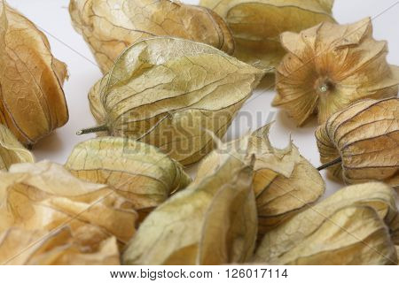 Several ripe Physalis fruits enclosed in their calyx against a white background
