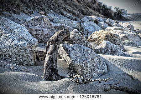Driftwood and Rocks on Sagamore Beach Massachusetts ** Note: Shallow depth of field