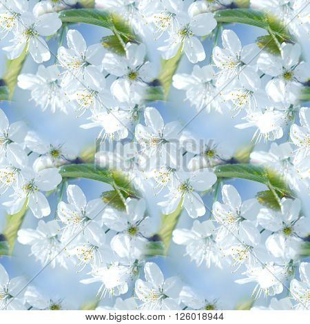 Springtime seamless background. Spring beautiful blossoming apple-tree or cherry branches.Spring branch of a tree with blossoming white small flowers on a background of blue sky and green leaves.