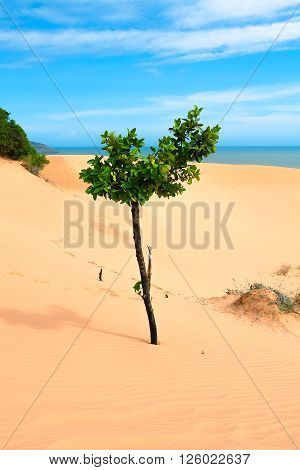 one tree in a sandy desert by the sea.