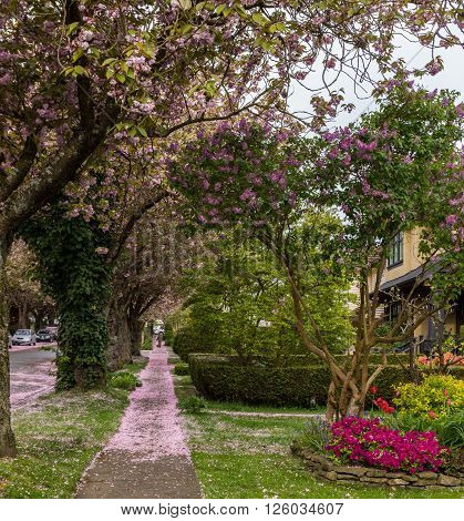 Green sidewalk near quiet street under trees