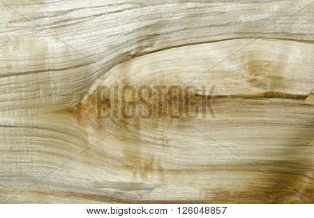 Tree trunk cut with beautiful patten drawing