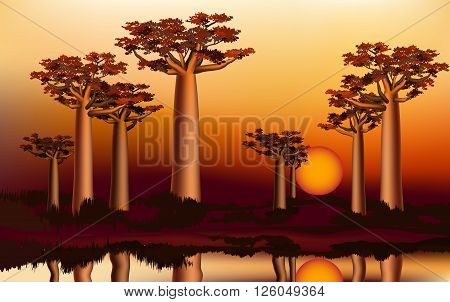 Sunset in the African baobab forest near the river