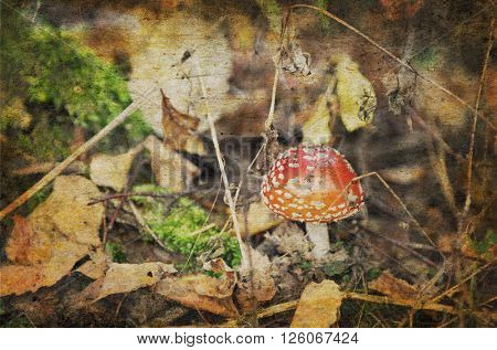 fly-agaric in a autumn forest in grunge style