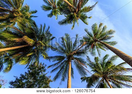 Vertical Perspective Of Palm Trees At Evening