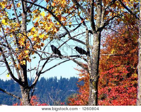 Autumn Blackbirds