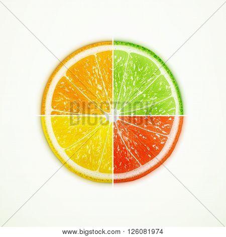 Orange lime lemon and grapefruit quartered eps10 vector illustration