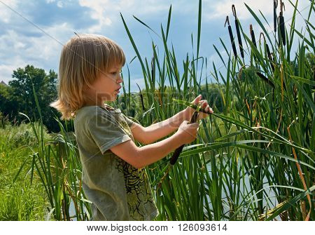 Cute boy playing with bulrush outdoor. summer