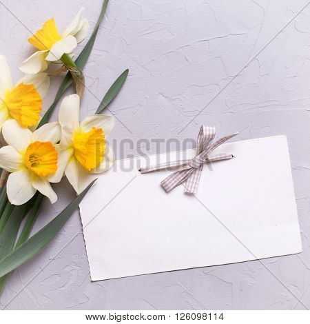 Fresh daffodils or narcissus flowers and empty tag for your text on textured grey background. Selective focus is on tag. Place for text. Square image.