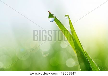 Fresh green grass with water drops closeup. Soft focus. Nature Background