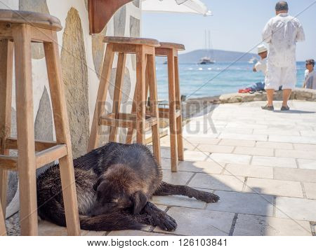 With tourists in background enjoying sea view in strong sunlight a homeless black dog is sleeping in shadow under tall stools. Taken in Bodrum Turkey.