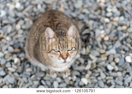 domestic tabby cat in the outdoor