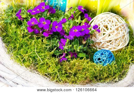 Aubretia with mos and raffia balls for early springtime garden decoration.