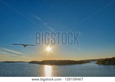 Warm sunset with Sea Gull at one side
