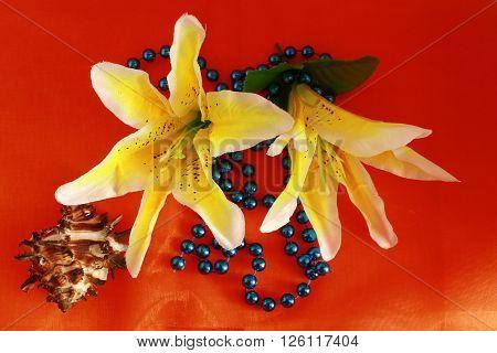 lily flower buds, close-up, close-up black background bud