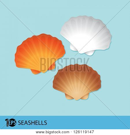 sea shells flat illustration, eps10 vector