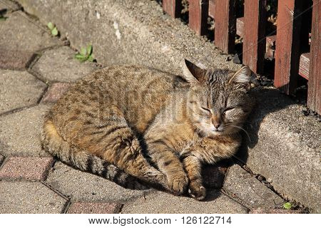 nice fluffy cat basking in the sun and relaxing