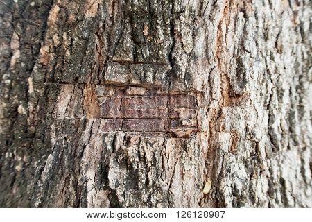 Knife marks on the bark. the tree bark background